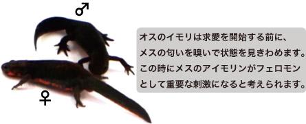 20170408_imori_ky_004