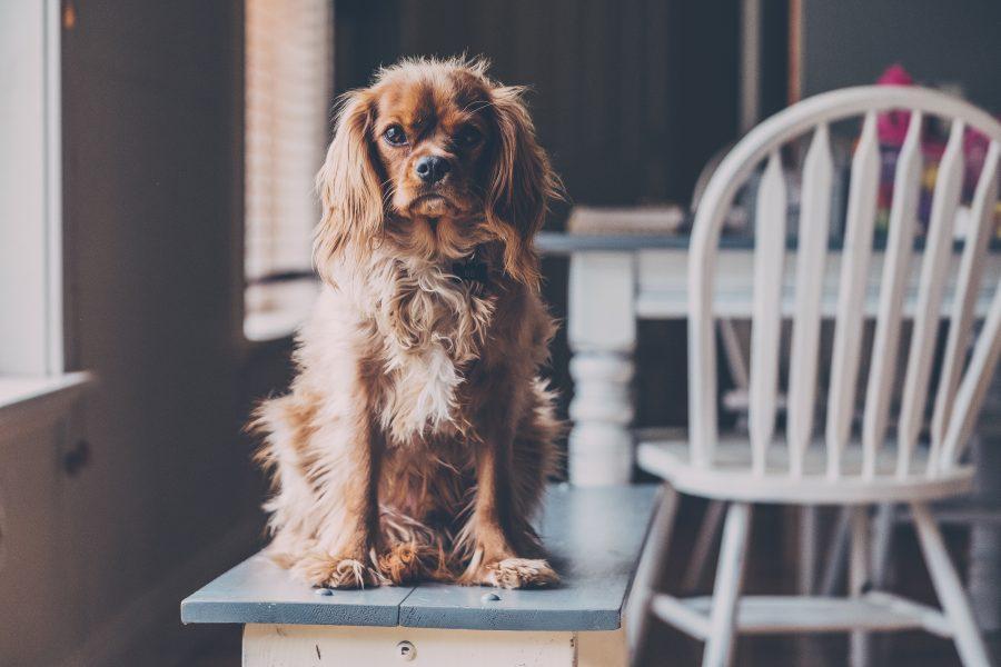 ベンチに座る犬