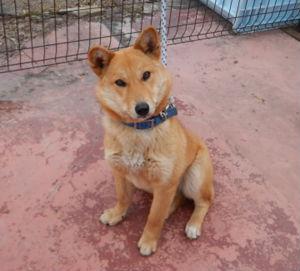 福島県動物愛護センターの犬猫譲渡会に参加する犬