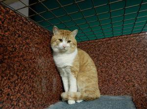 福島県動物愛護センターの犬猫譲渡会に参加する猫