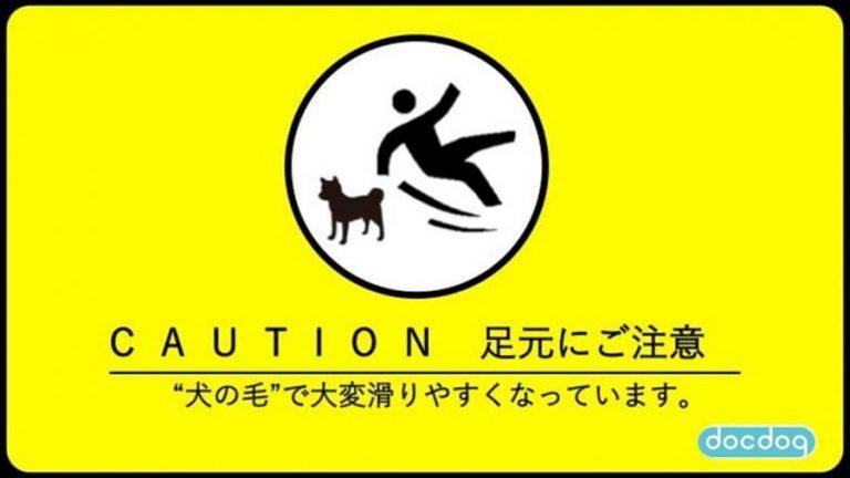20170425_inunokesuberu_ky_001