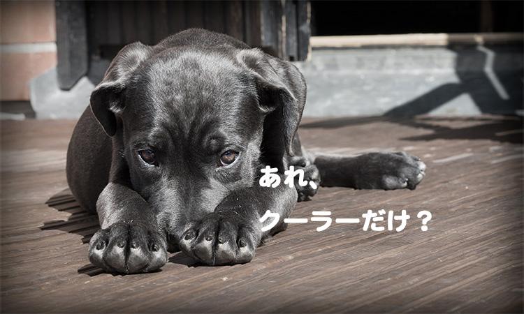 20170524_dogcooler_ni_008