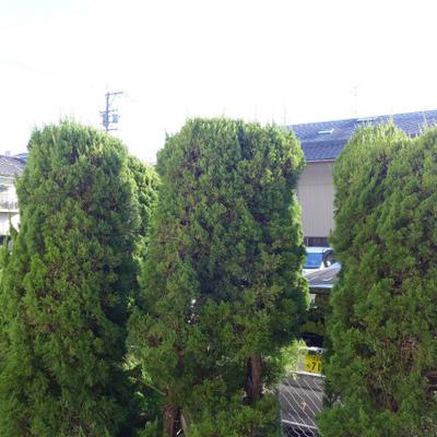 目の前は、木。オールウェイズ緑。