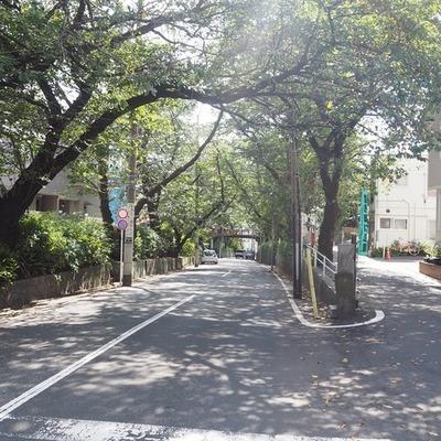 桜坂の上で、また君と