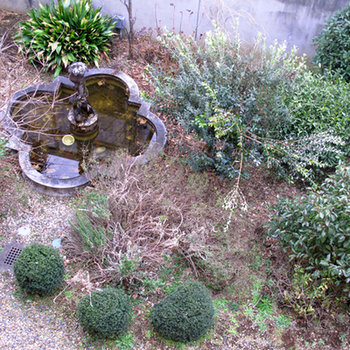 中庭、冬でも元気です
