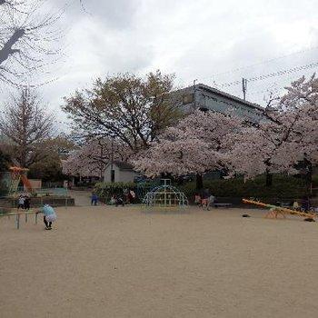 ちょうどいい大きさなんですよね、この公園。