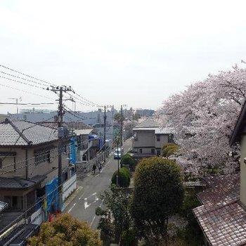 眺望も良し。桜が綺麗〜