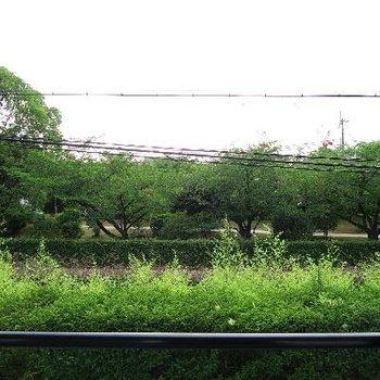 桜並木が素敵だーー!!