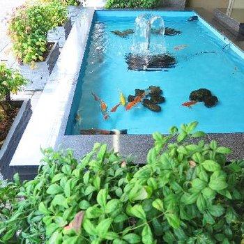 マンションの前で立派な鯉が泳いでました。