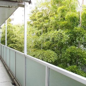 部屋の前の通路からも竹が