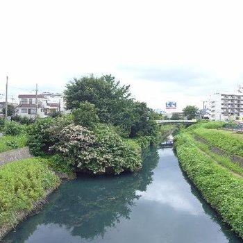 川口元郷への途中。川沿い散歩しよ〜