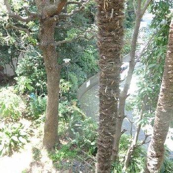 眺望。木々に癒されます・・・。※写真は別部屋です。