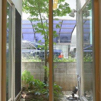 1Fお庭、素敵