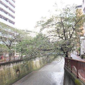 駅近くの目黒川!