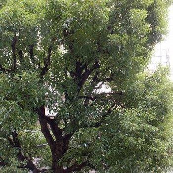 目の前を度オロが通っていますが、街路樹のおかげでほぼ木しか見えません。