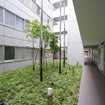共用部にも緑が植えられ爽やかな気分♪