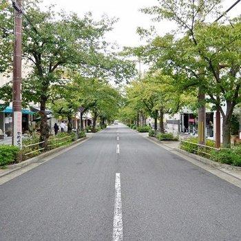 オープンカフェが並ぶ並木道。春は桜を咲かせます♪