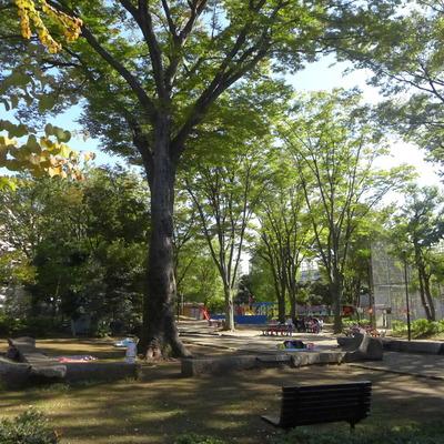 近くの公園。広い!