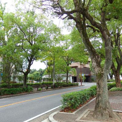区役所前の並木道を登っていきます