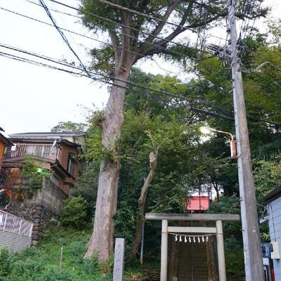 お部屋前の通りは大きな神社が!!