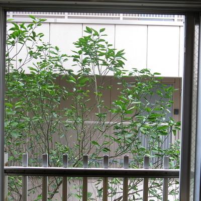 もうひとつの窓からの眺望はこんな感じ