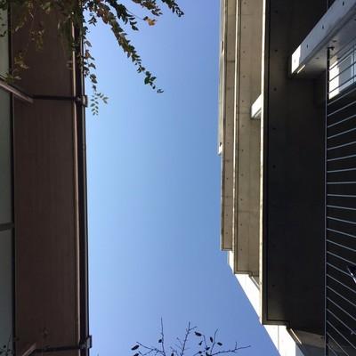 上を見れば青空