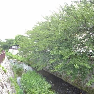 近くの川沿いを散歩しました
