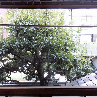大きな木が!!見ごと!!洗濯物も干せちゃいます。