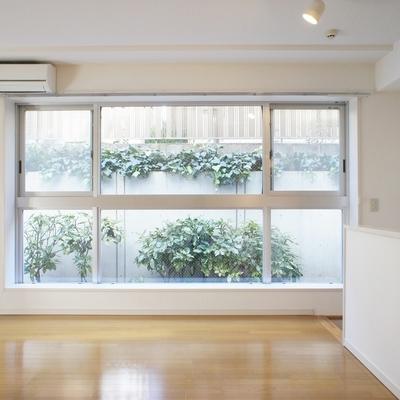窓から見える緑が気持ちいいです
