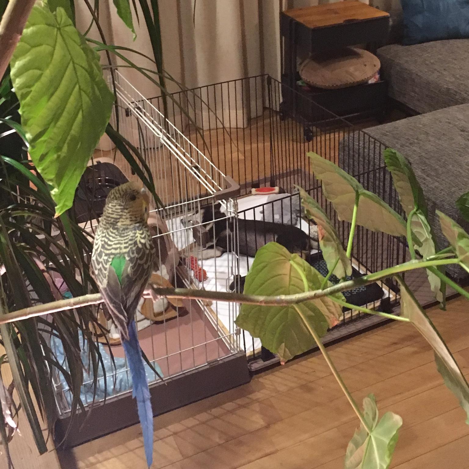 Lounge/お犬様優先なりに関連する部屋のインテリア実例