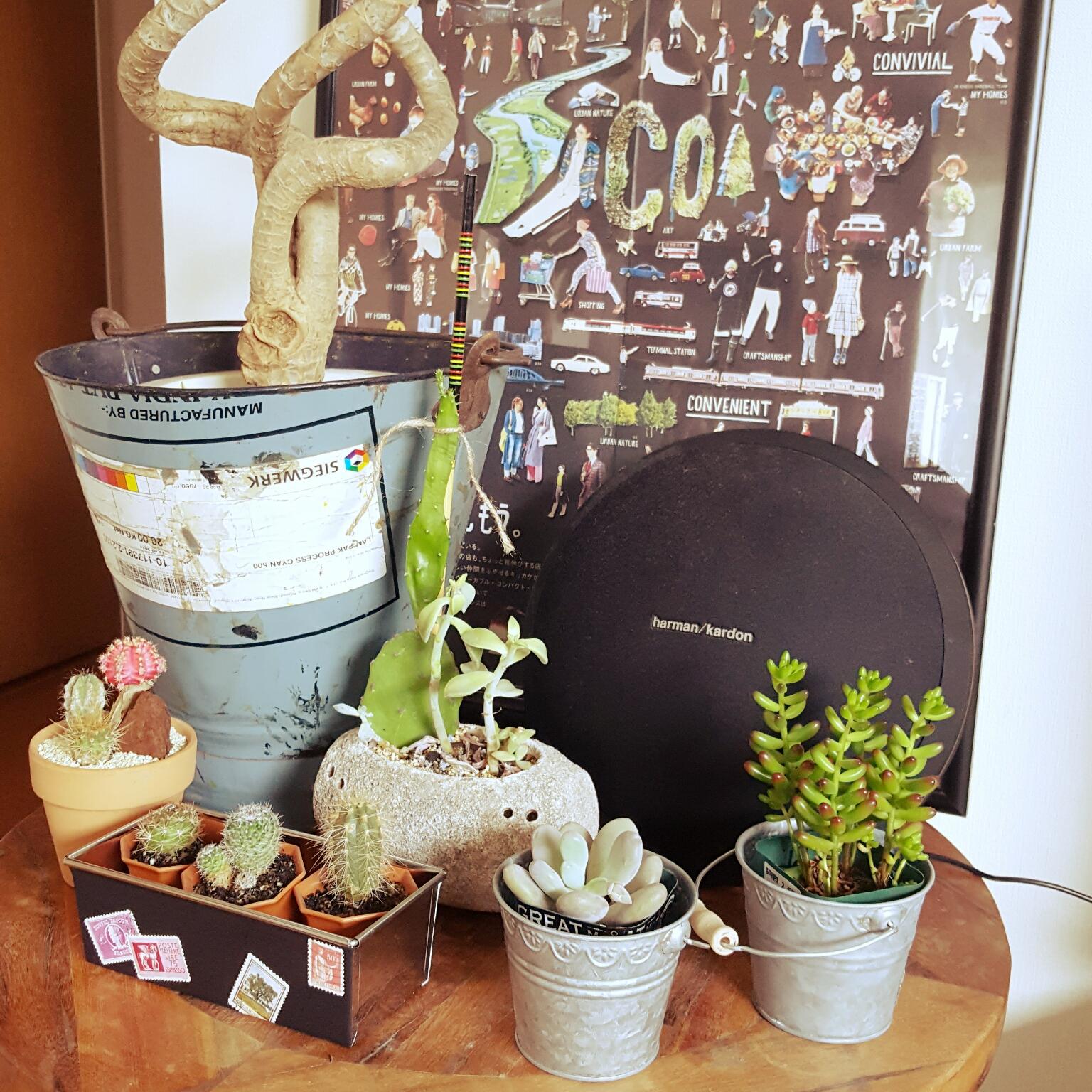 My Desk/サボテン/多肉植物/セリア/カフェ/100円ショップ/コンシンネ/カフェ風インテリアを目指してに関連する部屋のインテリア実例