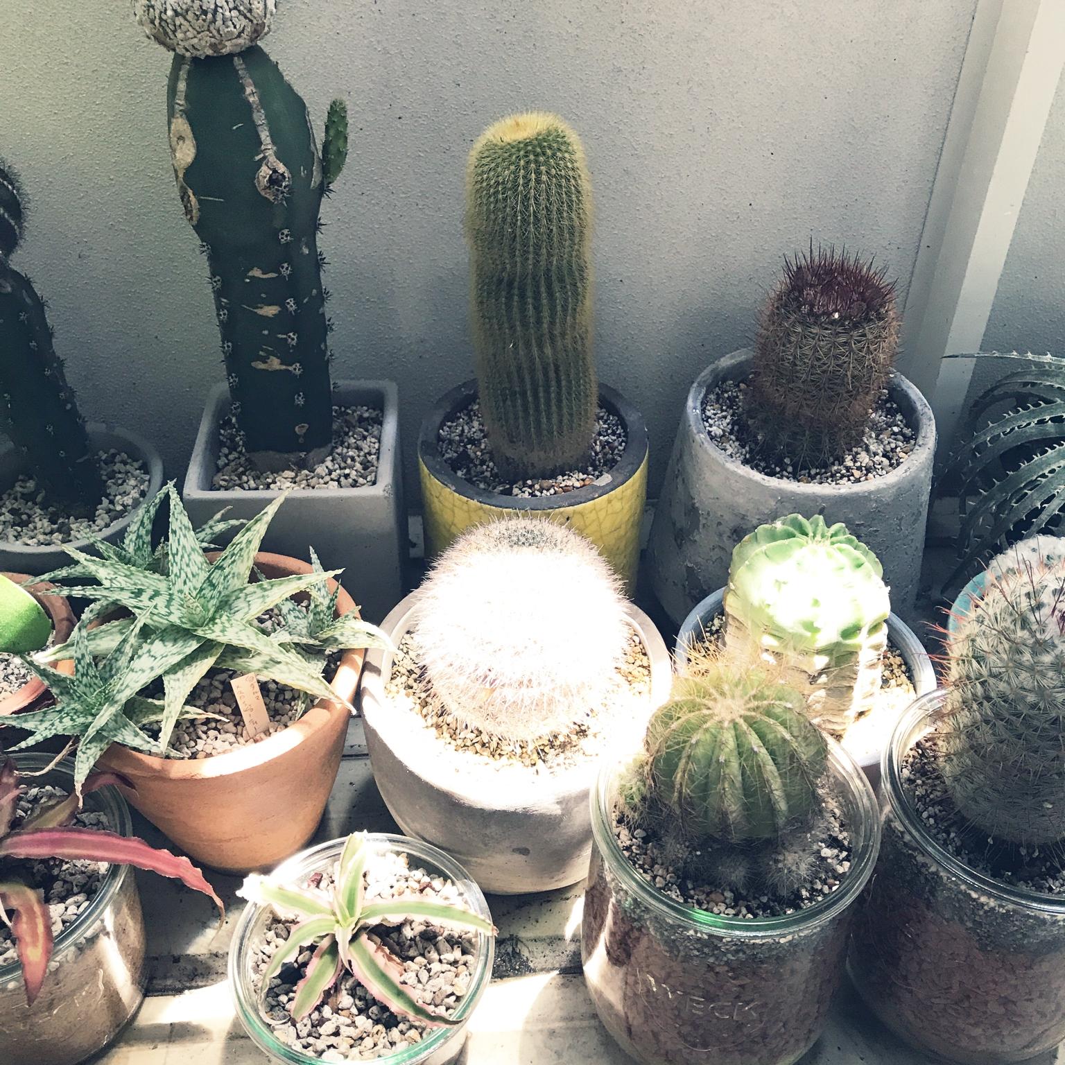 Bathroom/観葉植物/植物/サボテン/多肉植物/WECK/日光浴/ガラス容器/NO GREEN NO LIFE/グリーンのある暮らし/植物のある暮らし/クリプタンサスに関連する部屋のインテリア実例