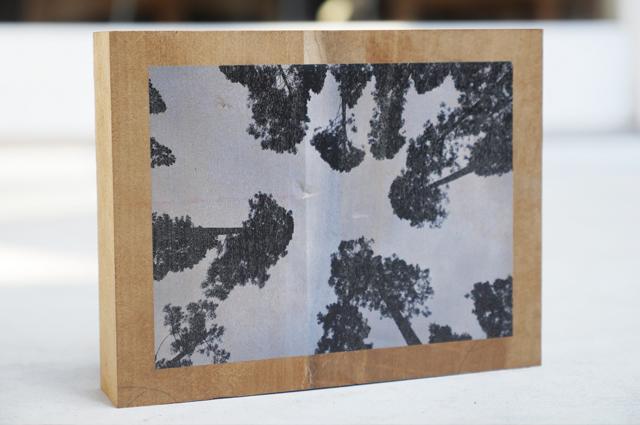 広葉樹フォトブロック