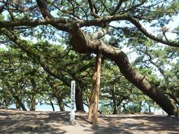 三保の松原は静岡県清水区の南東部に位置しており、北東に富士山をのぞむ白砂青松の景勝地として有名です。