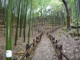 小机城は、神奈川県中部に位置し、鶴見川のほとりにある小規模ながら、堅固な平山城です。遺構はよく残っています。 1477年、山内上杉氏の家臣、長尾景春は五十子陣(山内・扇谷上杉氏の拠点)を急襲・崩壊させることで、長尾景春の乱(1477-80)がはじまりました。小机城には、景春の与党が立てこもったため、1478年、扇谷上杉氏の家宰、太田道灌は小机城を攻撃し、落城させました。この時、道灌が「小机は 先ず手習いの 始めにて いろはにほへと ちりじりになる」という戯れ歌を作り、兵を鼓舞した話は有名です。 その後、小机城は相模・武蔵を制圧した小田原北条氏の拠点として戦国末期まで機能しました。