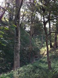 【興国寺城】北曲輪から大空堀をみる。空堀を撮るのは難しいが、これはなかなかいいのではないか。