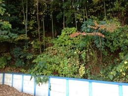 【榎下城】かつての的場を西側の駐車場から撮影。