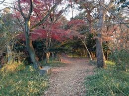 【高幡城】南側の曲輪