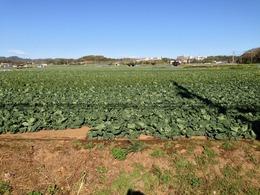 和田の畑作エリア。和田義盛の地盤だったはず。