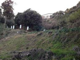 【玉縄城】七曲坂を振り返って撮影。写真外の右手に諏訪壇という最高標高地点がある。<br>      玉縄城の守護神として、諏訪神社が祀られ、櫓があったようだ。