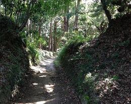 【韮山城】三の丸から権現曲輪へ。この辺は木々が茂っていて、10月初旬だが、蚊が多かった。