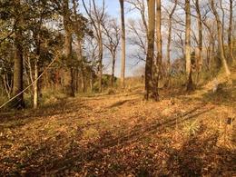 【松山城】兵糧倉跡。本曲輪から一段下がったところにある。
