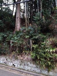 【石神井城】三宝寺の北東の土塁。わりと高いことが分かる。