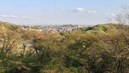 【枡形山城】横浜方面がバッチリ見える。ランドマークタワーが中央部の森の右側に見えている。<br>      なお、横浜には権現山城がある。