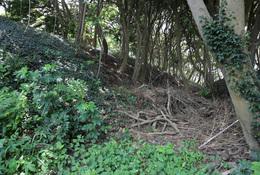 【新井城】荒井浜に至る空堀。左側が本曲輪の土塁。