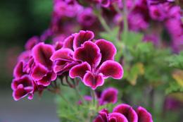 【新井城】新井城に咲いていた花。<br>      三浦氏滅亡のイメージと重なった。