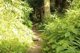【鎌倉城】舗装路が終わって、土の道へ。<br>      いよいよ、大仏切通しか。