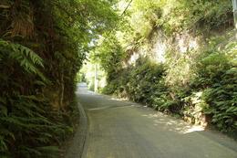 【鎌倉城】扇谷から山内をつなぐ亀ヶ谷切通し。<br>      扇谷側入り口付近。<br><br>      舗装はされているが、切通し自体は良好に残っていた。<br>      風通しがよかったので、暑い中、多少涼めた。<br><br>      山内には、建長寺や円覚寺がある。<br>      山内上杉家は、「山内」に屋敷を持ったため、山内上杉を称することになった。<br>      山内上杉家は上杉謙信の上杉。