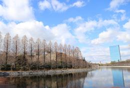 【大阪城】大坂城の空は思ったよりも広かった。<br><br>      手前が東外堀で、中央の木々に隠された石垣が巽櫓跡。