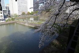 【江戸城】清水門櫓門の広い雁木を登ると、土橋がよく見える。<br>      つまり、ここから寄せ手を狙える。高低差もあり、かなり強力。